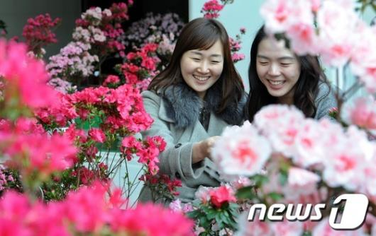 [사진]봄소식 솔솔, 활짝 핀 철쭉꽃