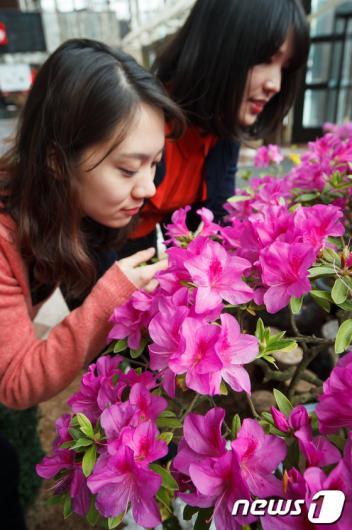 [사진]여심 유혹하는 봄향기