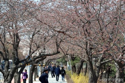 [사진]여의도 봄꽃축제 D-1