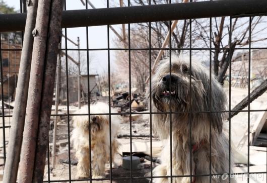 [사진]주인 기다리는 강아지들