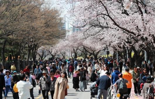 [사진]여의도 벚꽃축제 즐기는 시민들