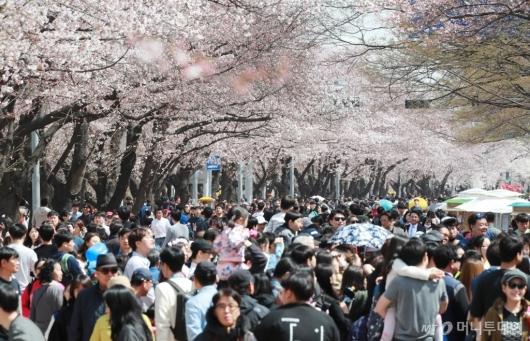 [사진]'완연한 봄이 왔어요'