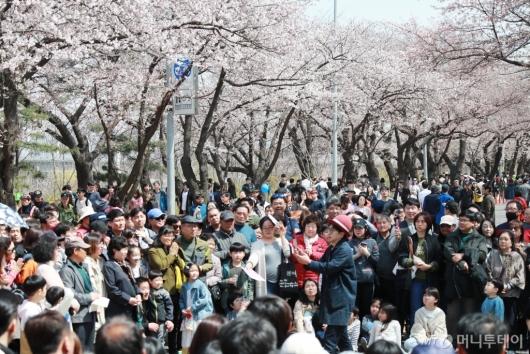 [사진]'벚꽃 향연' 여의도는 축제중