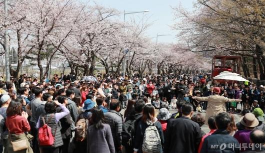 [사진]'여의도는 벚꽃축제중'
