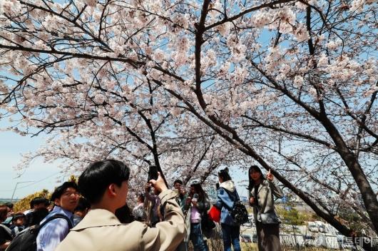 [사진]'완연한 봄 즐겨요'