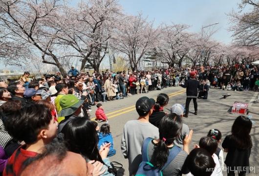 [사진]여의도는 축제중...'벚꽃의 향연'