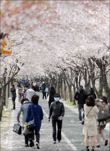 [사진]'벚꽃잎 맞으며 걸어요'