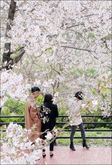 [사진]'벚꽃 엔딩 전 즐겁게'