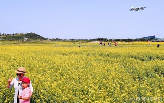 [사진]유채꽃밭에서 지나가는 비행기와 '찰칵'