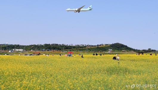 [사진]'유채꽃밭 위로 지나가는 비행기'