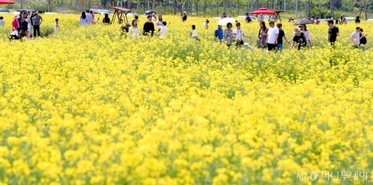 [사진]'유채꽃밭에서 즐기는 여유'