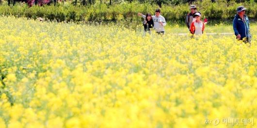 [사진]'유채꽃밭 나들이'