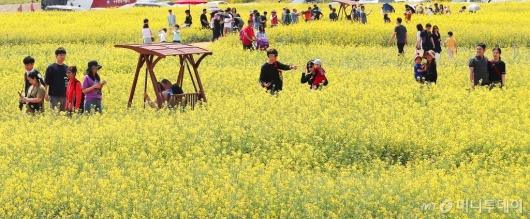 [사진]'인천공항 하늘정원 유채꽃밭 찾은 관광객들'