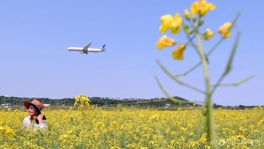 [사진]'비행기와 유채꽃'