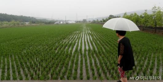 [사진]장맛비 바라보는 농민