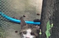 군산서 머리에 못 박힌 고양이가...