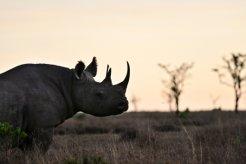 동물멸종 막는 투자 아세요?<br>'코뿔소채권' 첫 등장