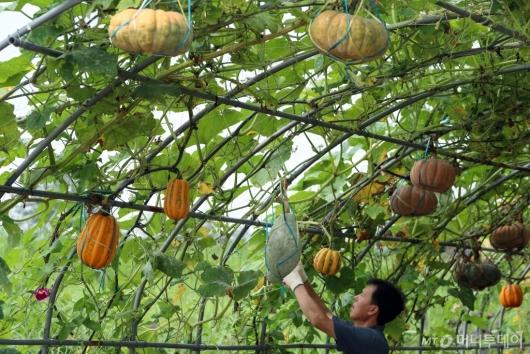 [사진]어느덧 다가온 가을의 문턱