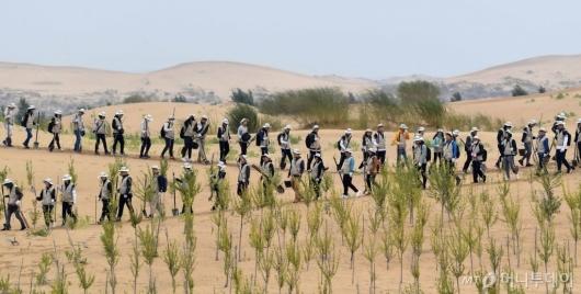 [사진]대한항공, 중국 쿠부치 사막 식림행사