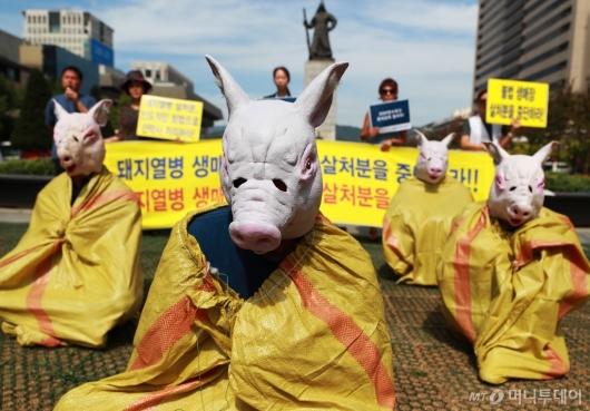 [사진]돼지 살처분…'생매장은 말아주세요'