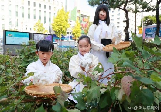 [사진]도심 속 가을걷이 '목화 따는 아이들'