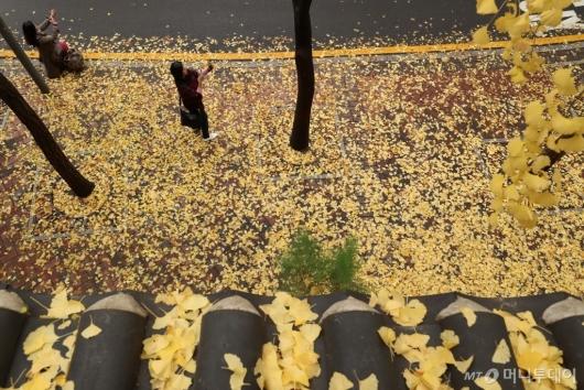 [사진]낙엽비 내린 정동길