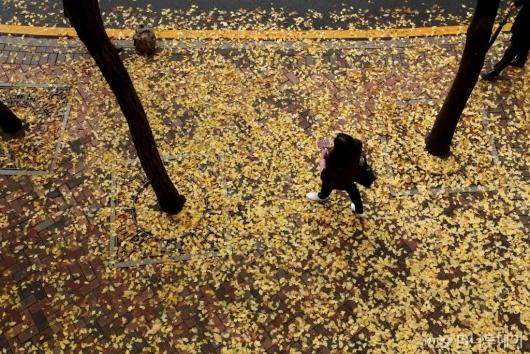 [사진]가을의 정취