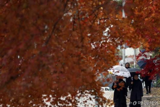 [사진]끝자락 가을에 내리는 비