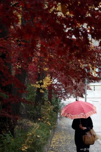 [사진]겨울 재촉하는 가을비