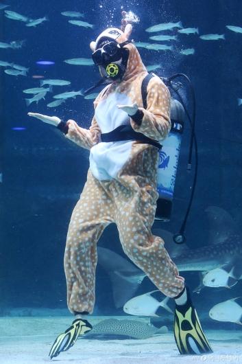 [사진]물속에서 만난 루돌프