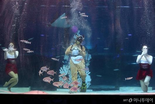 [사진]코엑스 아쿠아리움, 크리스마스 특별 수중 공연