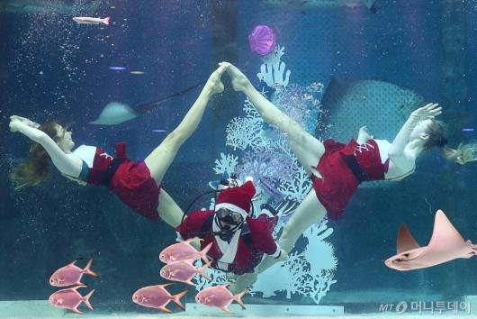 [사진]코엑스 아쿠아리움 크리스마스 특별 수중 공연