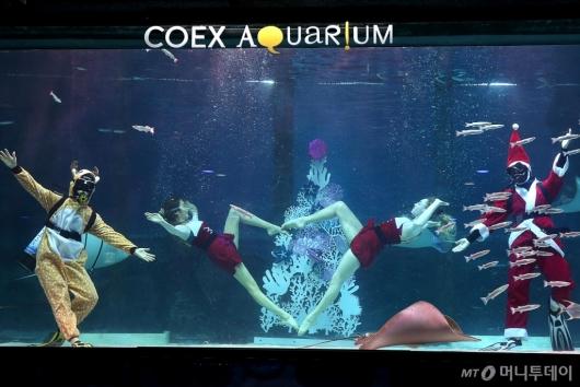 [사진]코엑스 아쿠아리움 '바닷속 친구들과 보내는 크리스마스'