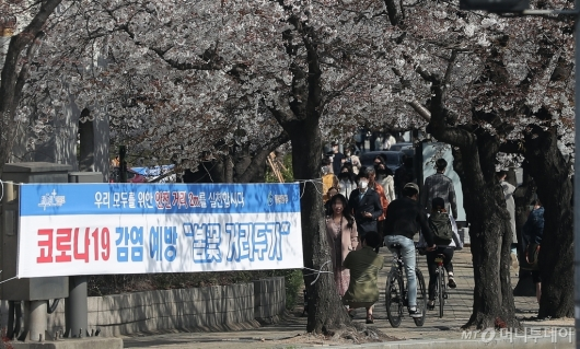 [사진]벚꽃 핀 여의도 '안전거리 2m 지키고 계신가요?'