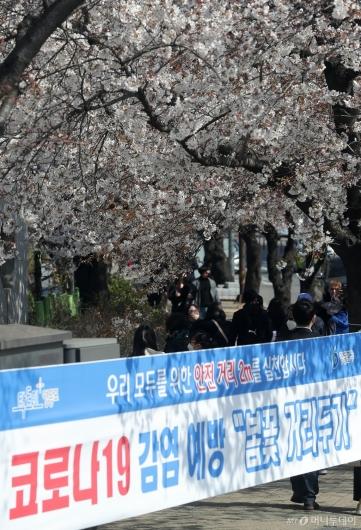 [사진]코로나19 감염 예방 '봄꽃 거리두기' 실천합시다