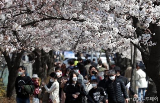 [사진]마스크 쓰고 여의도 벚꽃놀이