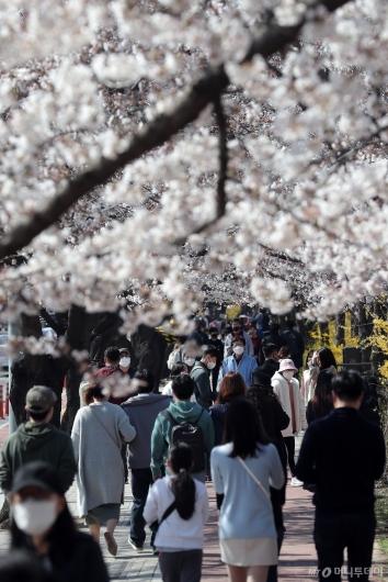[사진]사회적 거리두기 강화기간? 북적이는 여의도 벚꽃길