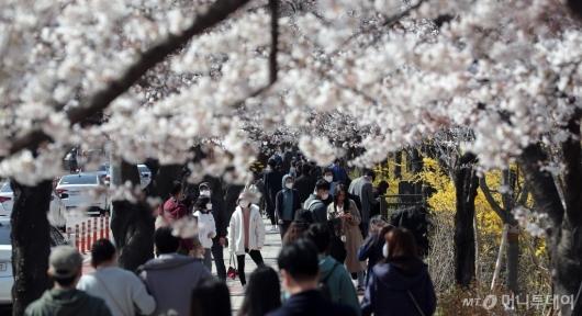 [사진]'사회적 거리두기 강화기간에도 벚꽃놀이'