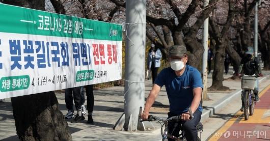 [사진]전면통제 앞둔 여의도 벚꽃길