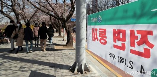 [사진]내달 2일부터 여의도 벚꽃길 전면 통제