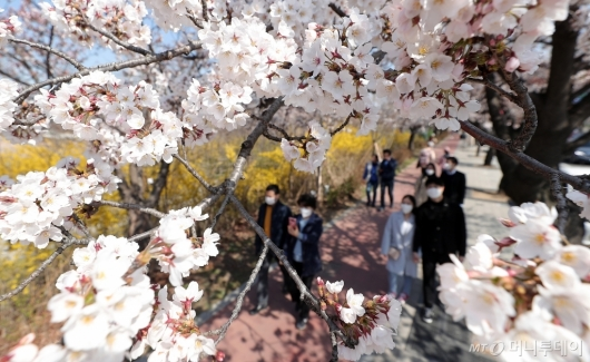 [사진]마스크 쓰고 벚꽃놀이 나선 시민들