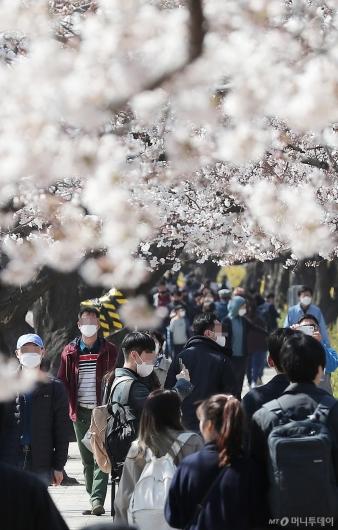 [사진]'코로나19에도 벚꽃놀이'