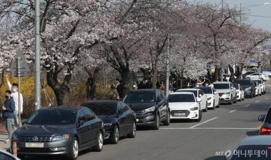 [사진]'여의도 벚꽃길 불법주차 몸살'