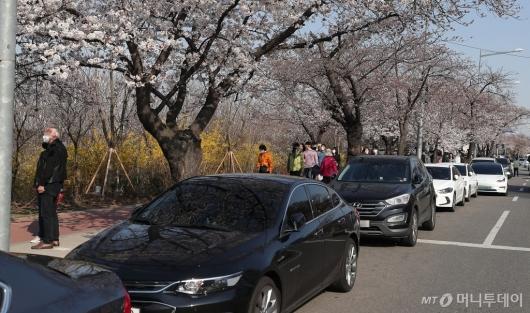 [사진]여의도 벚꽃길 '불법주차 벚꽃놀이'