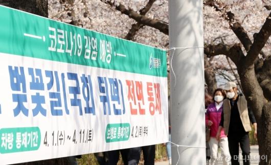 [사진]여의도 벚꽃길 내일부터 전면통제