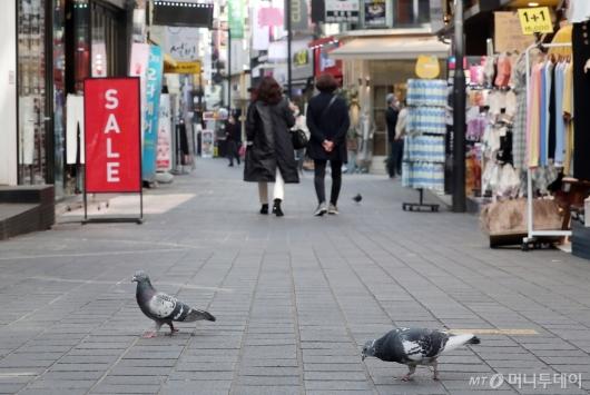 [사진]명동 거리 주인된 비둘기