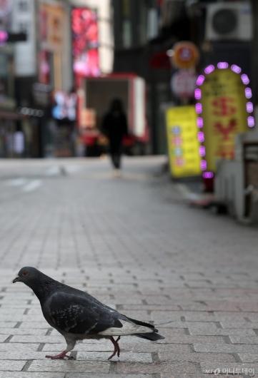[사진]한산한 명동 거리 차지한 비둘기