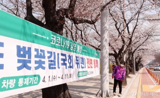 [사진]'내일부터 여의도 벚꽃길 통제됩니다'