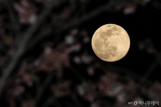 [사진]슈퍼문과 벚꽃