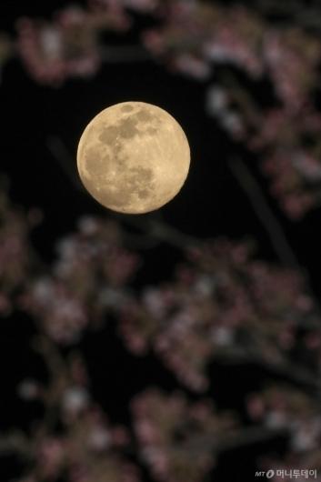 [사진]벚꽃 속 슈퍼문